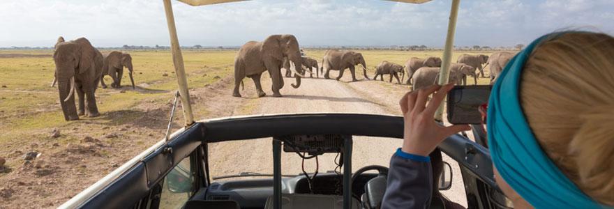 Profiter d'un safari d'exception sur mesure